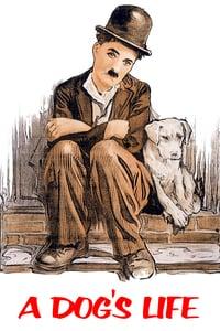 Vida de Cachorro